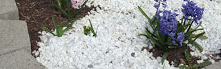 Random flowers and plants suddenly