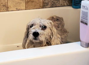 Wet dog blues